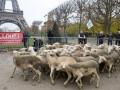 Фермеры привели стадо овец к Эйфелевой башне