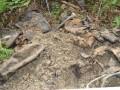Во Львовской области неизвестные осквернили десятки захоронений