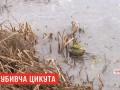 На Черниговщине после употребления цикуты скончался ребенок