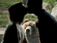 Эмоциональный медведь попал на свадебные фото