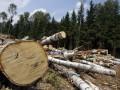 Для резиденции Януковича срубят деревьев почти на 2 млн грн - журналисты