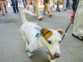 В центре Киева прошел парад собак