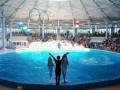В Евпатории открылся крупнейший в Украине дельфинарий