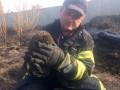 В Киевской области из горящей травы спасли ежика