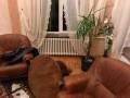 Дали по голове и связали ноги: в Ровенской области преступники напали на фермера