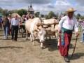Санстанция запретила продавать на Сорочинской ярмарке шаурму и молоко