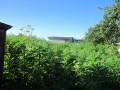 В Нежине бывший заключенный посадил конопляное поле