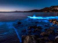 Завораживающее явление: в Австралии залив засиял неоновым светом