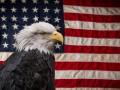 Индекс Dow Jones в США снизился на 2,41%