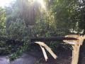 Из-за непогоды упавшие деревья в Украине травмировали 4 человек