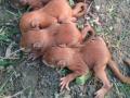 Под Луцком пытаются спасти новорожденных бельчат