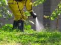 Киевский детский сад атаковали дикие пчелы
