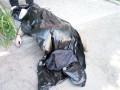 В Днепре возле АТБ мужчина упал и умер