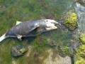 В Одессе на людном пляже нашли мертвого дельфина