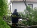 Древопад и размытые дороги: В Хмельницкой области разгулялась стихия