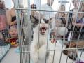 В Киеве прошел фестиваль котиков
