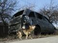 В зоне АТО КрАЗ протаранил автобус с военными: погибли 13 человек