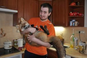 Парень спас лису от забоя – и вот какой она выросла!