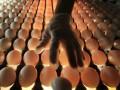 Крупнейшие в Украине производители яиц показали резкий рост прибыли в первом полугодии