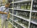 В России самым популярным алкоголем остаются пиво и водка