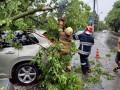 Непогода в Киеве: Деревья рухнули на 15 авто, двое людей травмированы