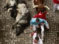 Нас не догонят. В Памплоне прошел традиционный забег с быками (фото)