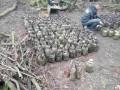 В Ивано-Франковской области мужчина закопал 200 кг конопли в банках