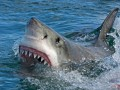 Акула покусала в Египте отдыхающих украинцев