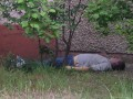 Под Киевом возле жилого дома нашли труп