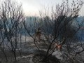 Обострение в зоне ООС: Военных обстреляли в районе Красногоровки