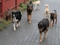 В Полтаве стая псов напала на женщину, полиция отбивалась газом