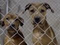 В Киеве стерилизовали больше 2,7 тыс. бездомных животных с начала года