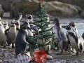 В Детройте появится гигантский вольер для пингвинов