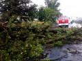 На Закарпатье ураган повалил 300 гектаров леса