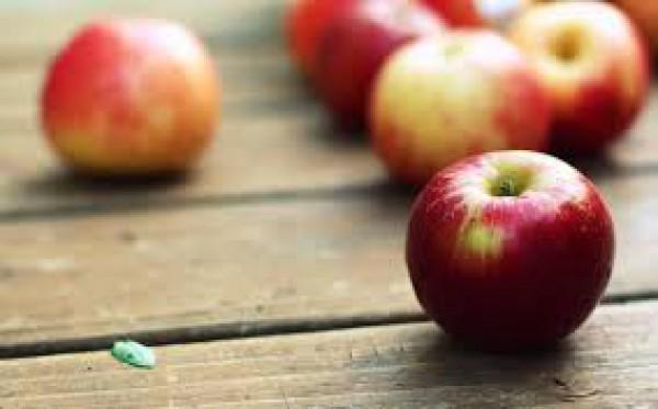"""Посмеяться и задуматься – объясняем психологию отношений """"на яблоках"""""""