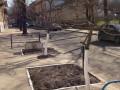 Коммунальщики высадили деревья мимо лунок - прямо в асфальт и плитку