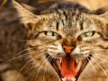 Бешеный кот покусал трех людей в Харьковской области