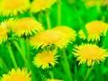 Лето в Украине наступит в конце апреля