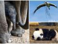 Животные недели: аист-строитель, малышка панда и новорожденный слоненок