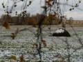 Погода на неделю: идут заморозки и мокрый снег