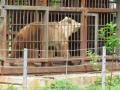 На турбазе в Приамурье медведь напал на женщину