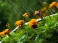 В ближайшие сутки дожди покинут почти всю территорию Украины