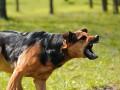 Под Харьковом собака до смерти покусала свою хозяйку