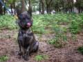В Украину вернули собаку, захваченную в плен вместе с моряками в Керченском проливе