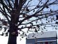 В Италии появилось дерево ботинок
