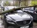 В Харькове упавшее на авто дерево едва не убило человека