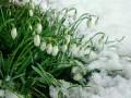 Погода в Украине на 15 февраля: Тепло, местами мокрый снег