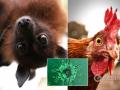В МОЗ опровергли фейк о том, что коронавирус передается через еду