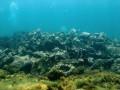 В Карибском море найдены останки корабля, на котором Колумб открыл Америку