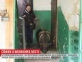 В Киеве женщина завела 100-килограммовую свинью